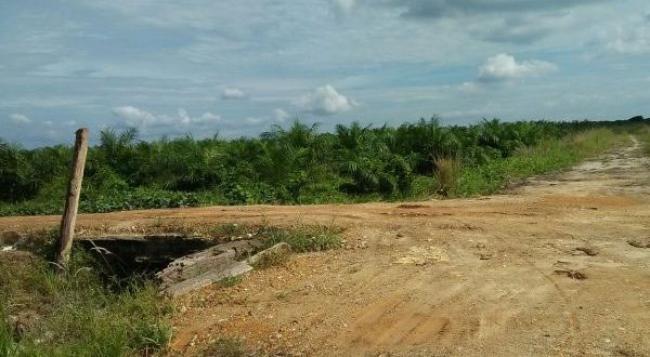 YLBHR Gugat PT BSP dan Mantan Anggota DPRD Kampar Terkait Kawasan Hutan