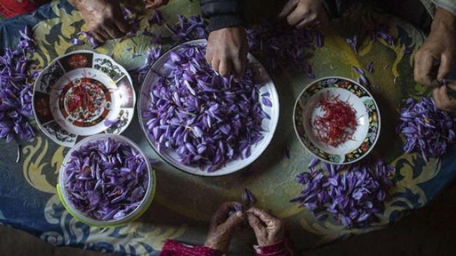 Mengenal Keunikan Saffron, Rempah Paling Mahal di Dunia
