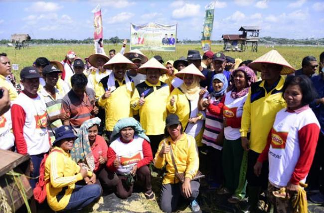 Bupati Bengkalis Panen Raya Padi dengan Masyarakat Desa Harapan Baru
