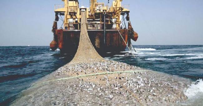 Tiga Fokus Dinas Kelautan dan Perikanan Riau Tahun Ini, Salah Satunya Illegal Fishing