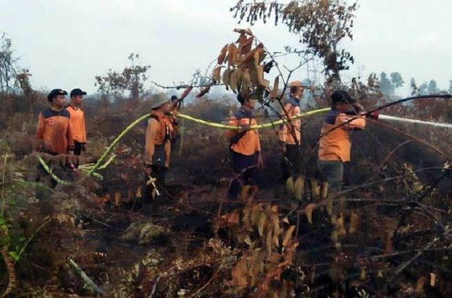 TRC BPBD Bengkalis Padamkan Karhutla di Kecamatan Rupat