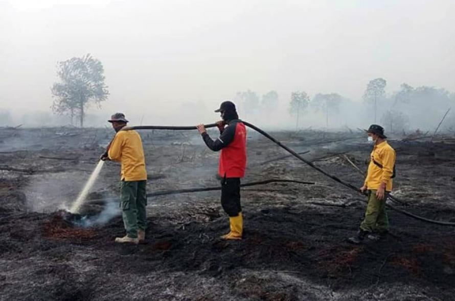 Luas Lahan Terbakar di Riau 248 Hektar, Kepala BPBD: Petugas Terus Berjibaku