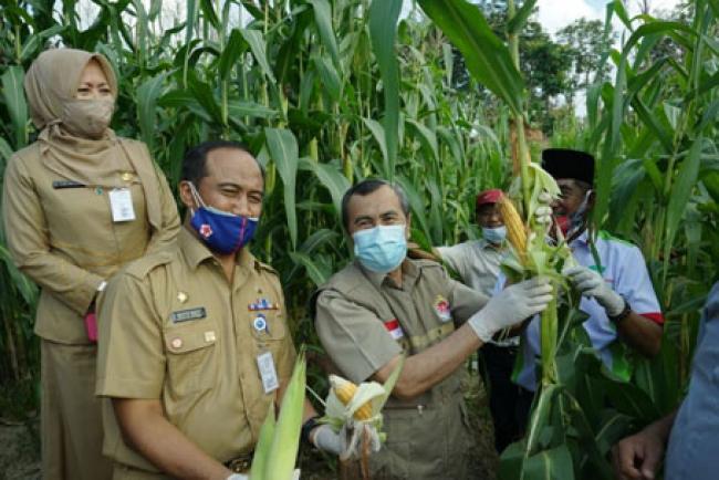 Ikut Programkan Ketahanan Pangan, Riau Siapkan 30.000 hektar lahan