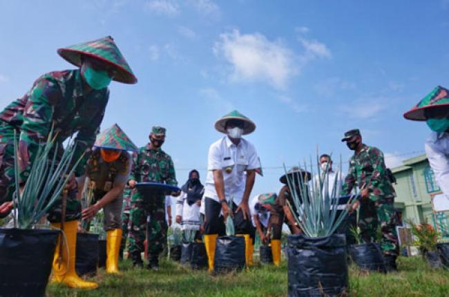 Demplot Ketahanan Pangan Terpadu Kodim 0321/Rohil, Suyatno: Di Lahan yang Secuil Ini Manfaatnya Luar Biasa