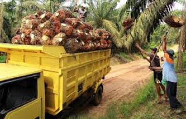 Harga Sawit di Riau Naik Jadi Rp2.310,76