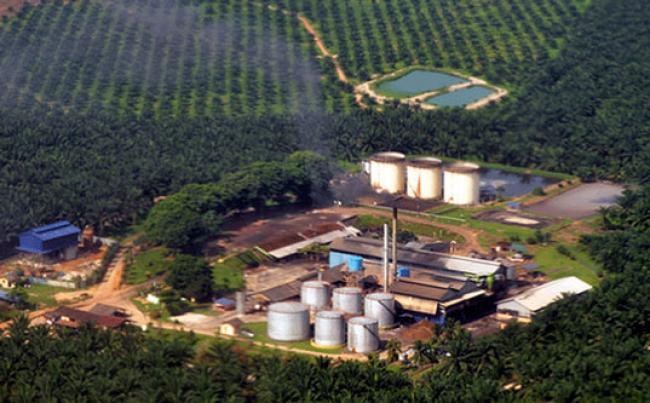 Suhardiman: 70 persen Perusahaan Perkebunan Bayar Pajak di Luar Riau