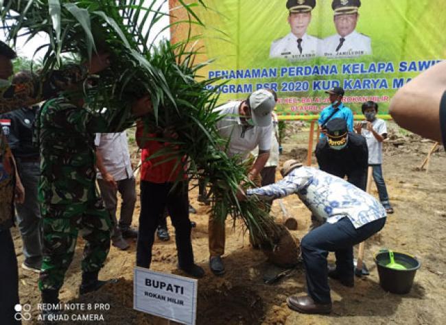Bupati Suyatno Hadiri Penanaman Perdana Program Peremajaan Kelapa Sawit Rakyat KUD Karya Mandiri