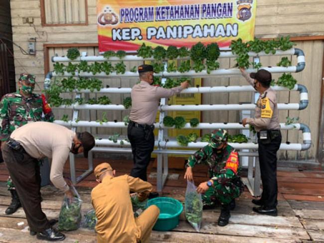 Polsek Panipahan Bagikan Hasil Panen Sayuran Hidroponik Bhabinkamtibmas Untuk Warga Isolasi Mandiri