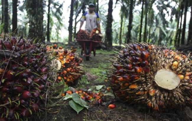 Dewan Desak Pemprov Riau Tuntaskan 1,8 Juta Kebun Ilegal