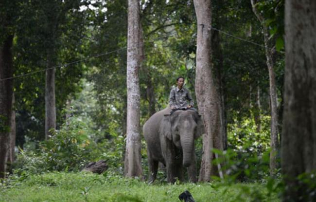 Kawanan Gajah Rusak Kebun dan Tanaman Warga Langgam, BBKSDA Riau Turunkan Petugas