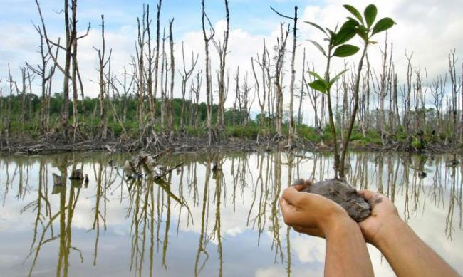 Hari Mangrove, 21 persen Sebaran Magrove Dunia ada di Indonesia