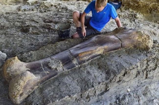 Tulang Paha Dinosaurus Raksasa Ditemukan, Beratnya 500 Kg