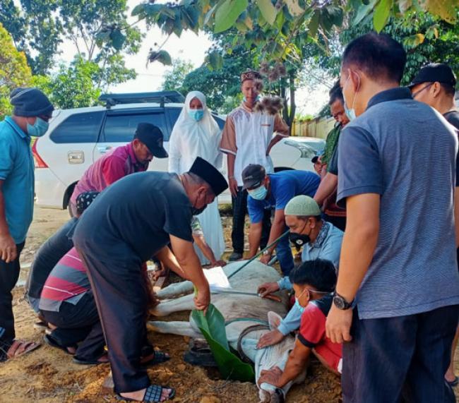Perdana, Puskesmas Balaijaya Sembelih 3 ekor Sapi