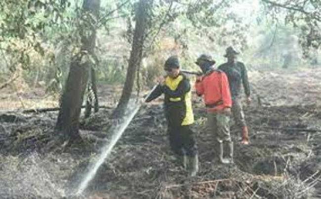 Turun Dibandingkan Tahun Lalu, Luas Lahan Terbakar di Riau Hingga Awal Juli Hanya 901 Ha