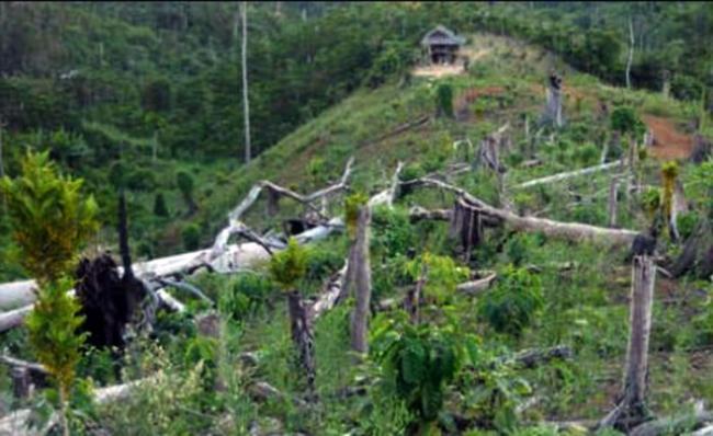 Mabes Polri Selidiki Perambahan Hutan TNBT di Indragiri Hulu