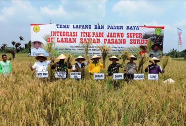 Panen Raya Perdana Integrasi Itik dan Padi Jarwo Super Di Inhil