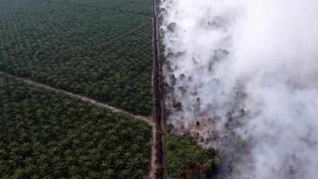 Jokowi Ancam Pecat Jenderal, Ini Fakta Kebakaran Hutan RI