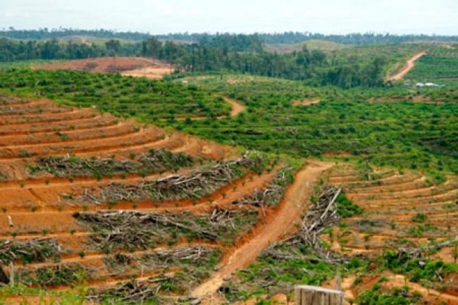 Pemprov Riau akan Libatkan KLHK Tertibkan Perkebunan Ilegal