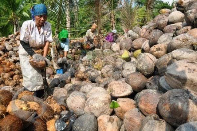 Berikut Daftar Harga Komoditi Perkebunan di Riau Pekan ini