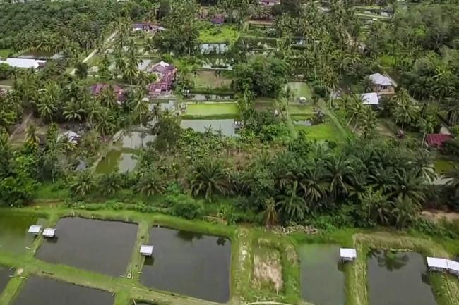 Lolos 50 Besar ADWI 2021, Inilah Desa Wisata Koto Mesjid Kampung Patin Riau