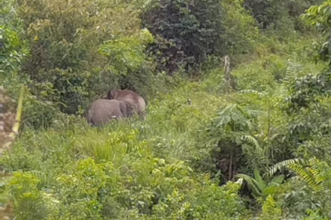 Konflik Gajah dan Warga di Inhil, Ini kata BBKSDA Riau