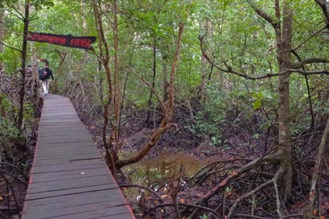 Kembangkan Wisata Mangrove di Bengkalis, Mahasiwa STIES Beri Kabar Gembira