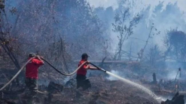 KPAI: Kebakaran Hutan Rebut Hak Hidup Anak, Siapa yang Disalahkan?