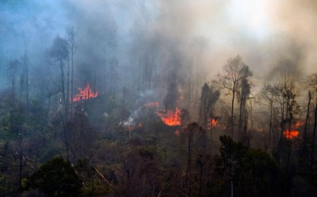 Sejak Januari, 8.108,93 Hektar Lahan di Riau Terbakar
