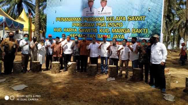 Bupati Suyatno Lakukan Penanaman Perdana Kelapa Sawit Program PSR 2020