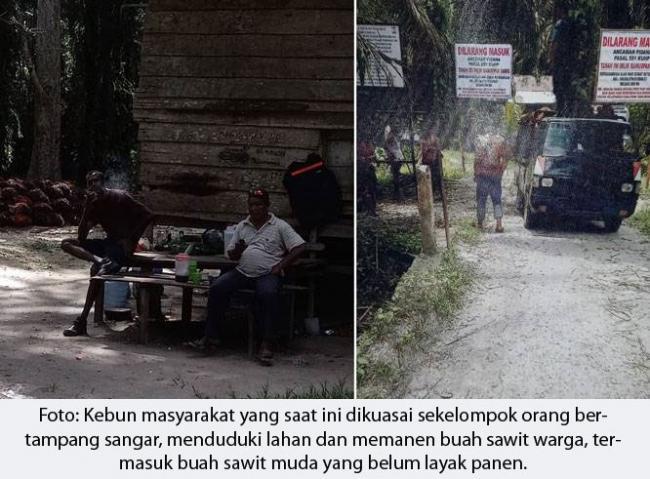200 hektar Sawit Warga Dikuasai Preman, Udin: Pak Kapolda Jangan Tunggu Kampung Kami Berdarah-darah Baru Bertindak!