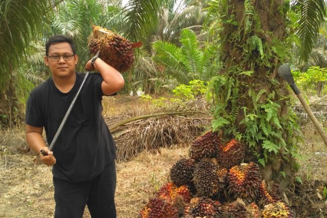 Petani Sawit di Riau Mesam-mesem nih, Harga TBS Meroket Tinggi