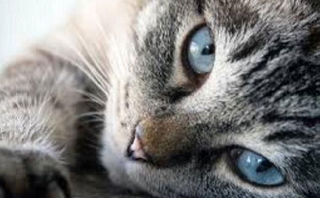 Viral Video Kucing Kejar Pemuda di Masjid, Netizen: Kakinya Abis Nginjek Tulang Ikan