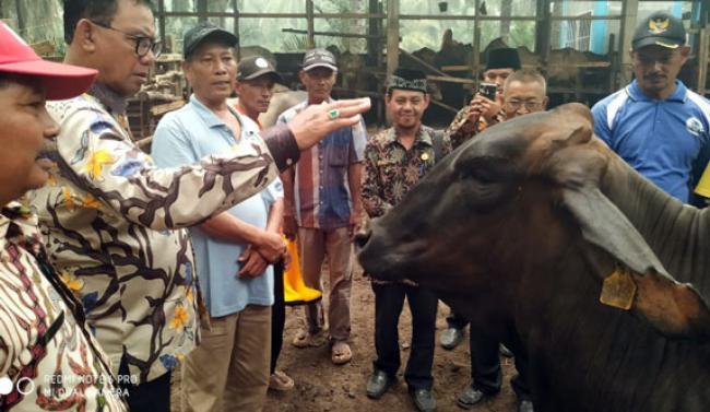 Pemkab Rohil Bantu Petani Kembangkan Ternak Sapi