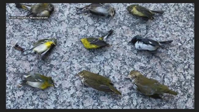 Pertanda Apakah Ini? Ribuan Burung Mati Jatuh dari Langit