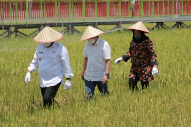Gubernur Syamsuar: Padi Kaya Gizi Diharapkan Atasi Stunting di Riau