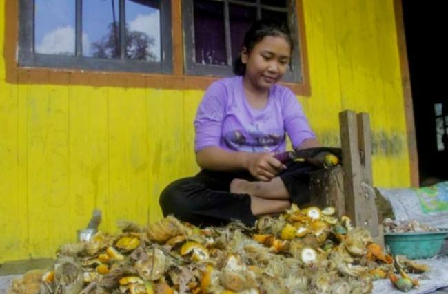 Harga Pinang Kering dan Kelapa Butiran di Riau Masih Stabil, Ini Harganya