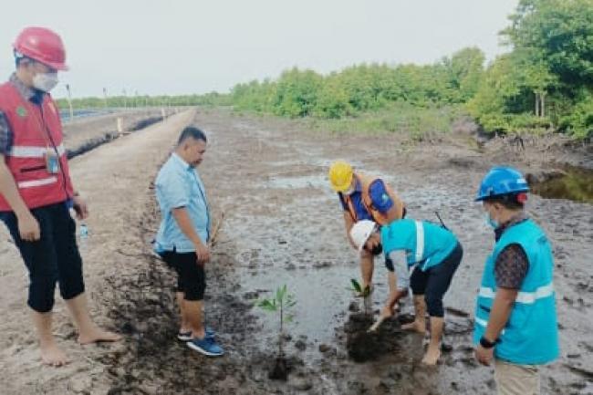 Peduli Lingkungan, PLN Tanam Bakau Untuk Jaga Ekosistem Pulau Bengkalis