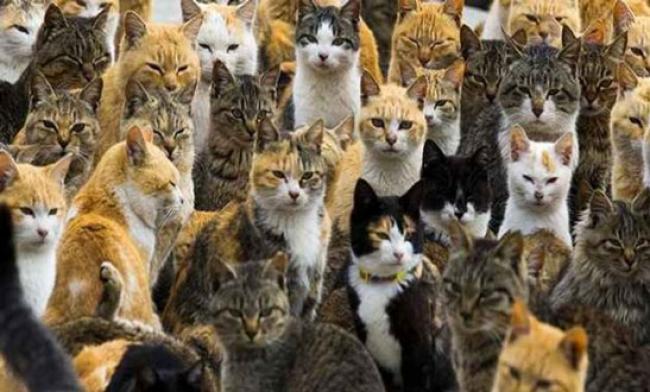 Sejarah Menarik di Balik Terciptanya Pulau Kucing di Jepang