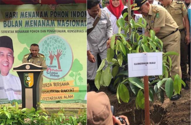 Sempena Hari Menanam Indonesia 2017, Gubri Tanam Pohon di Desa Pantai Kuantan Mudik